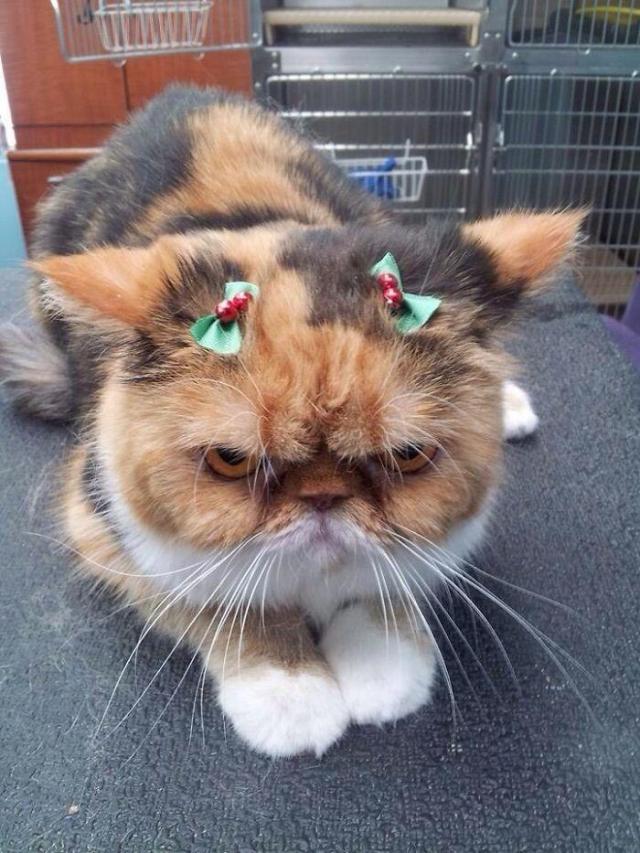 kot, psy, święta, zwierzęta domowe