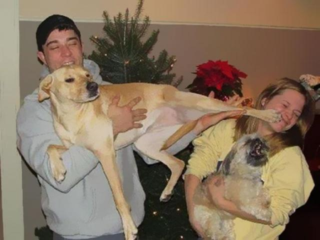 psy, święta, zwierzęta domowe, kot