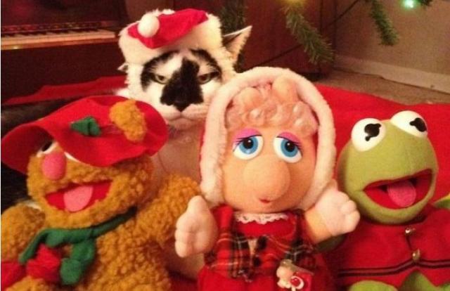 Dlaczego zwierzęta nienawidzą świąt? Zabawna galeria