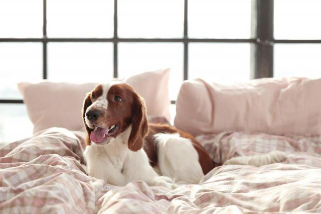 7  rzeczy, których nigdy nie powinieneś mieć w swoim łóżku