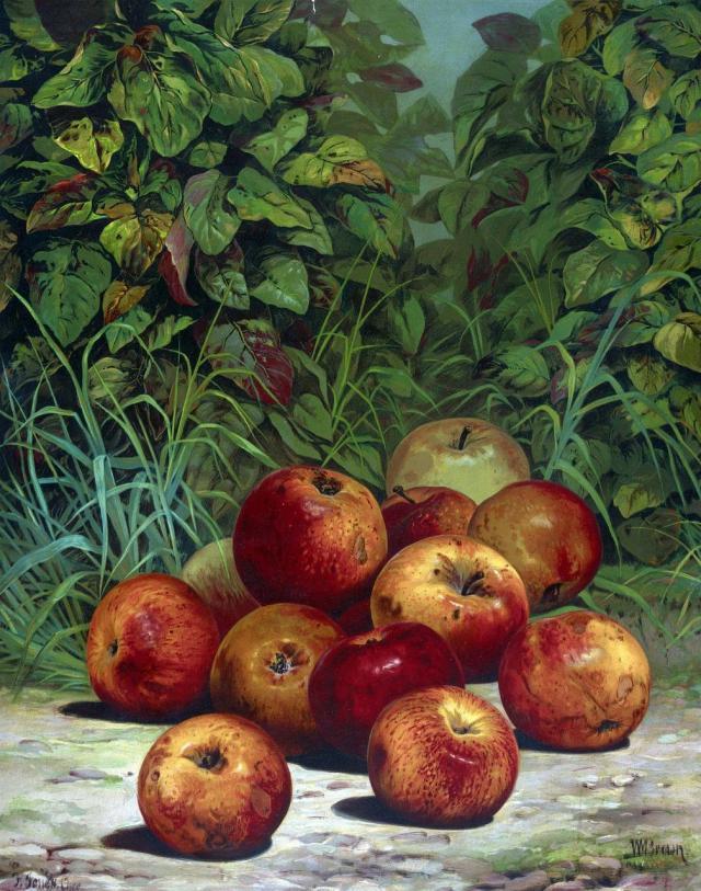 Niesamowite pomysły na dekoracje wykonane z malowanych owoców
