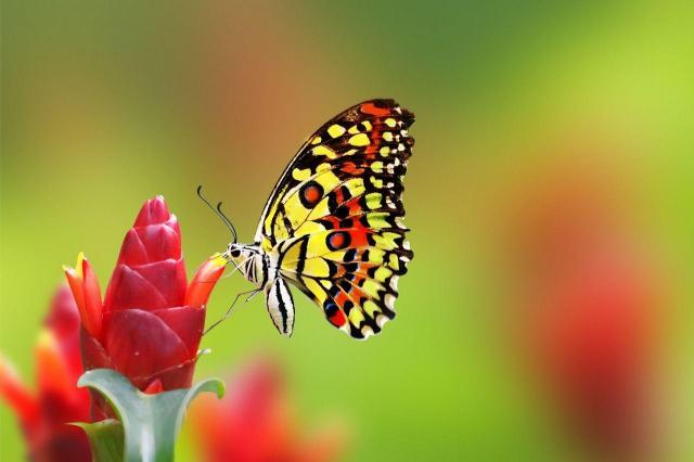 Jakie owady wykonują pożyteczną pracę w Twoim ogrodzie?