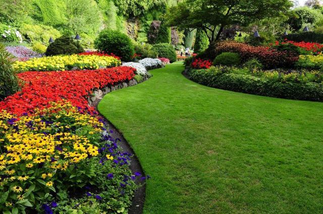 ogród, owady, pożyteczne owady