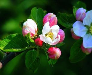 Kwiecień w sadzie – o czym trzeba pamiętać?