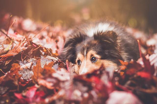 4 rady dla właścicieli psów na jesień - zadbaj o zwierzaka!