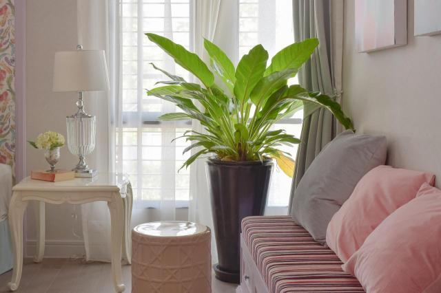Rośliny w domu potrafią wprowadzić przyjazny klimat - 10 propozycji na naturalne dodatki