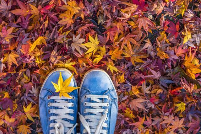 jesień, jesienne porządki