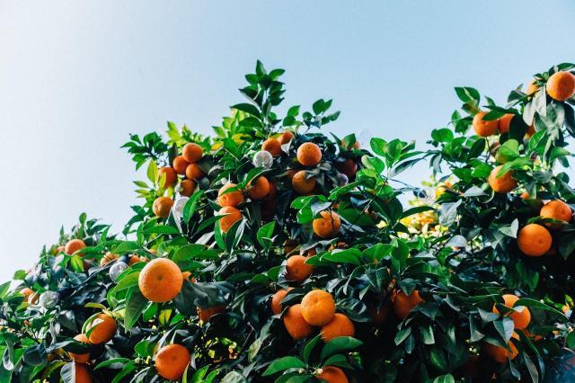 6 domowych roślin, które mają na Ciebie zbawienny wpływ