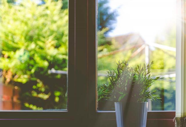 5 tanich w utrzymaniu roślin które pomogą Ci utrzymać ład w domu