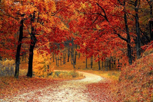 8 rzeczy, które musisz uporządkować późną jesienią