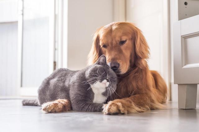 4 problemy, które napotykasz zimą, mając zwierzęta w domu