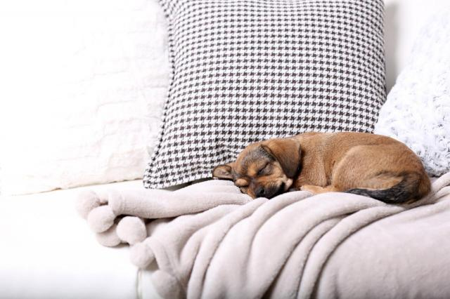 5 rzeczy, których nienawidzi każdy właściciel psa zimą