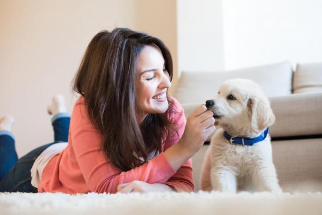 rasy psów, psy, zwierzęta domowe