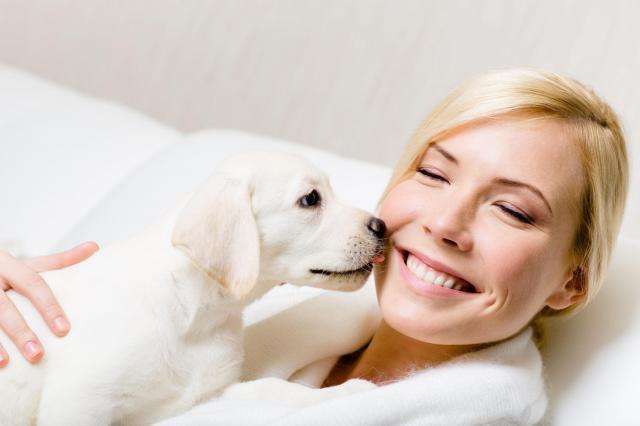 psy, zwierzęta domowe, rasy psów