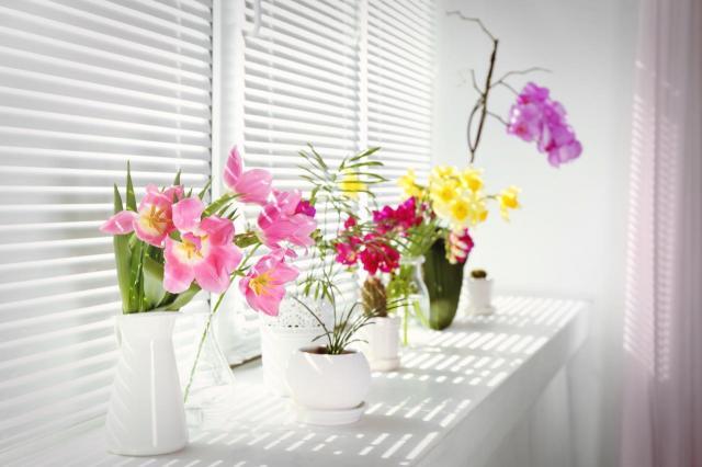 Najlepsze kwiaty doniczkowe do domu – które przetrwają najdłużej?