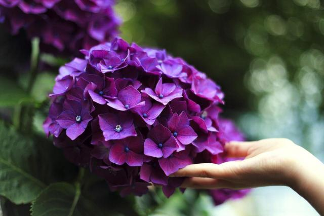 5 całorocznych kwiatów do ogrodu, które są piękne