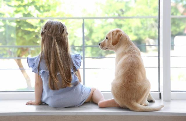 Jak przygotować psa do upalnych dni? O tym musisz pamiętać!