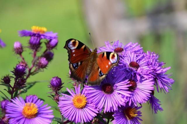 5 najlepszych kwitnących kwiatów do ogrodu na jesień