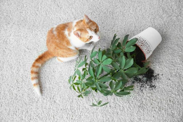 3 najbezpieczniejsze rośliny w domu dla kotów