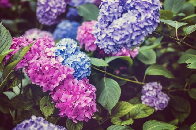 5 roślin, które nie lubią zimy - koniecznie je zabezpiecz!