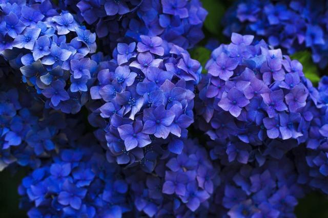 5 kwiatów, które nienawidzą zimy - lepiej o nie zadbaj!