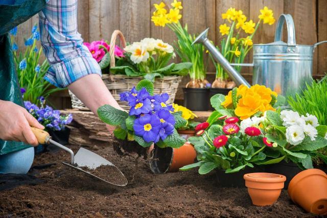 3 rzeczy, które musisz wykonać w ogrodzie na wiosnę