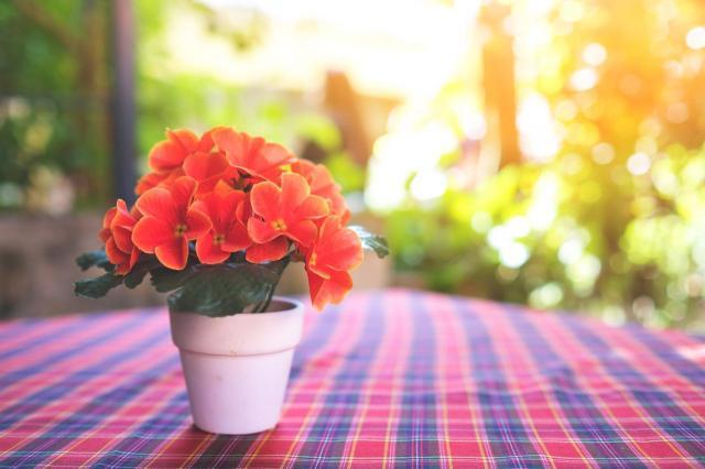 Wiosenny klimat w mieszkaniu - jak zrobić to niskim kosztem?