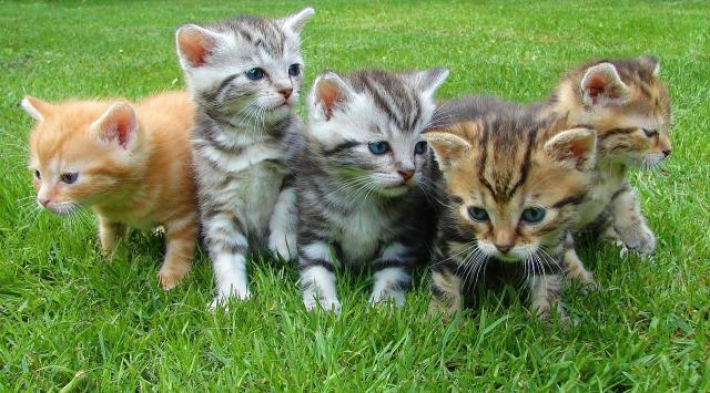 Jak dbać o kota, aby zawsze był zdrowy i pełen energii?